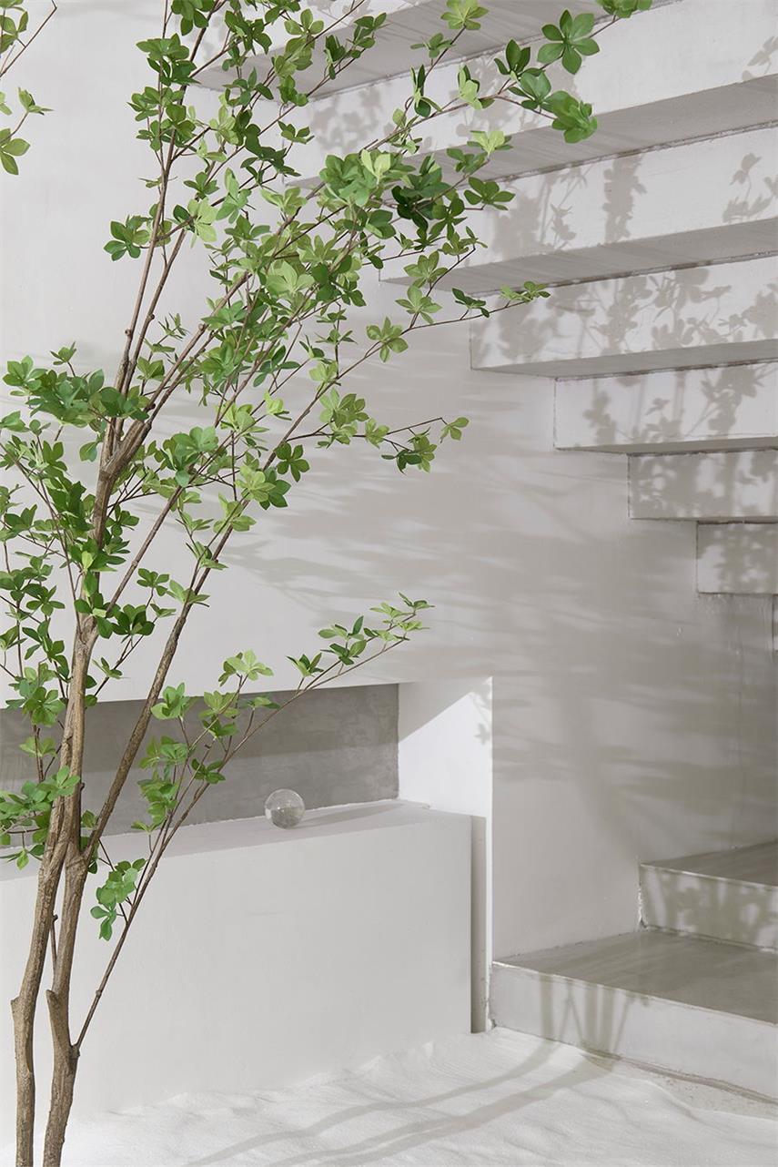 美容空间造景绿植设计