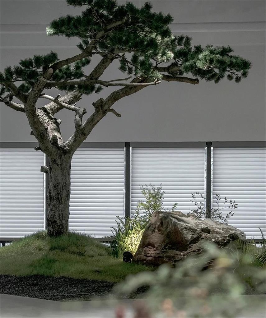 共享办公栽种的绿植设计