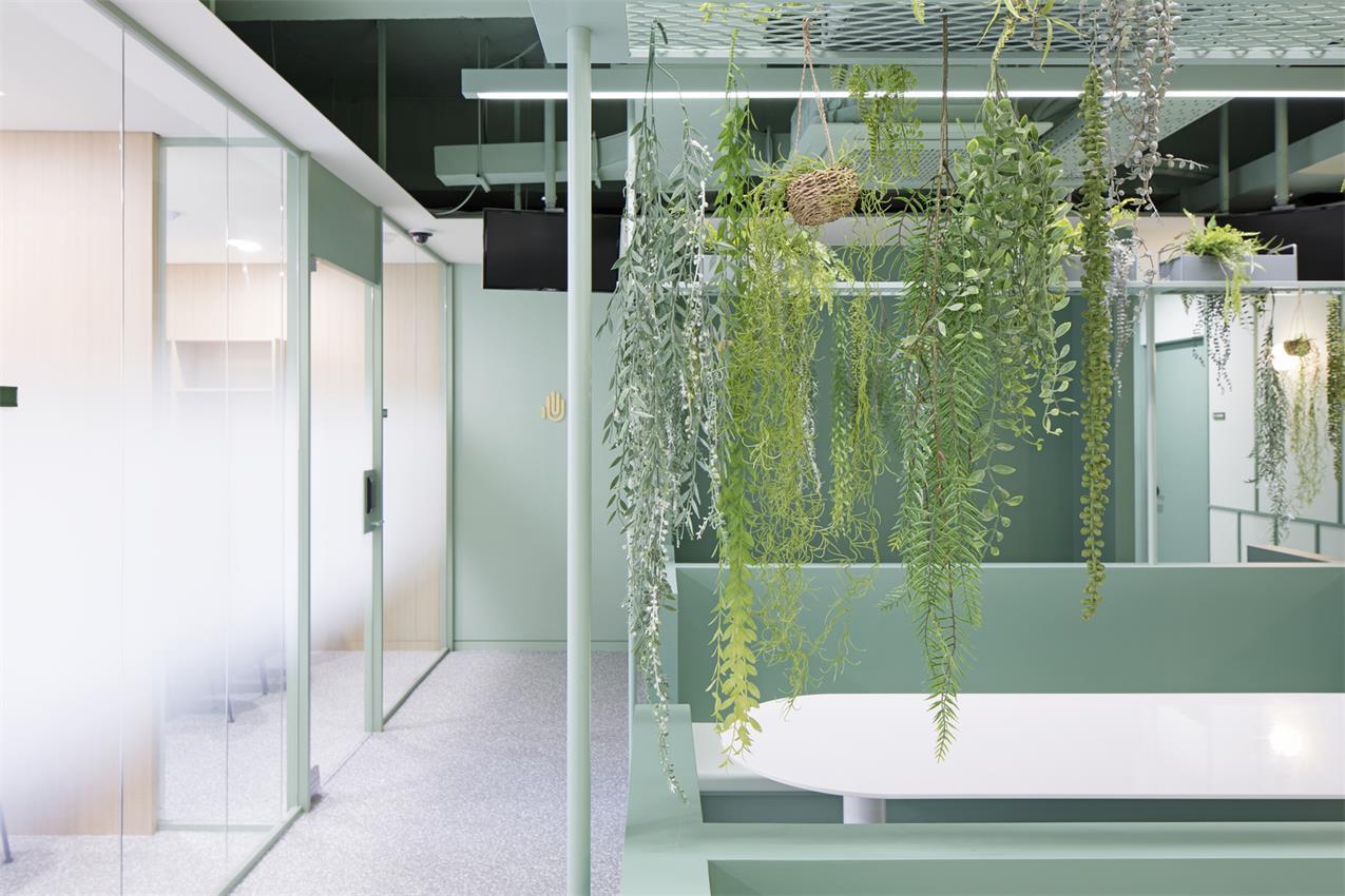 办公室吊挂的绿植设计