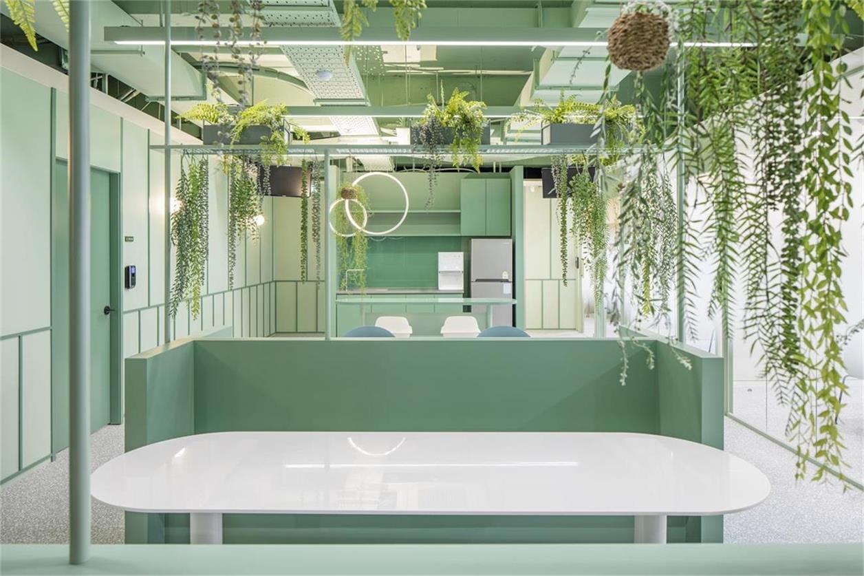 办公室随处可见的绿植氛围